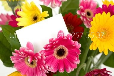 Доставка цветов уфа в инорсе
